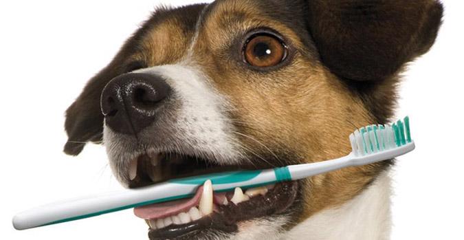 Cuidar da saúde bucal dos cachorros o previne de várias doenças