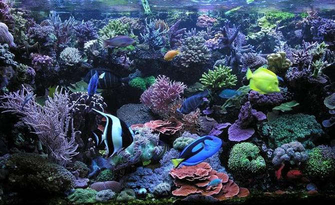 Manter o aquário limpo requer um pouco de tempo. (Foto: Reprodução)