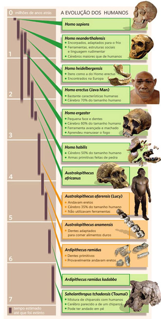 Evolução dos seres humanos