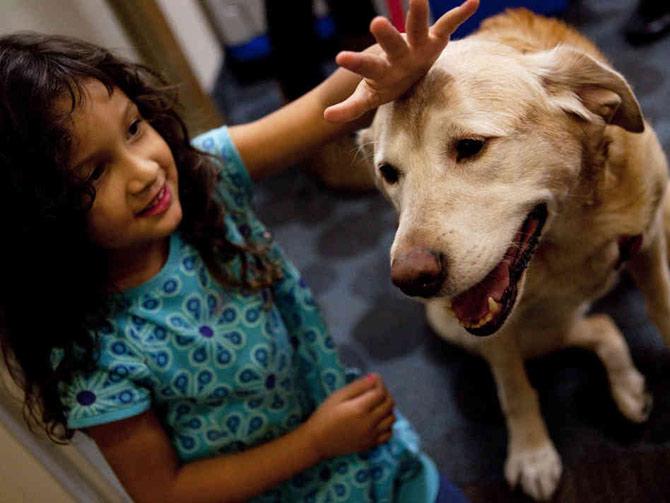 Crianças são os mais beneficiados com contatos com animais (Foto: Reprodução)
