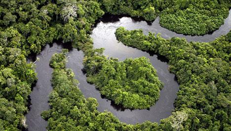 Vista Aérea Floresta Amazônica