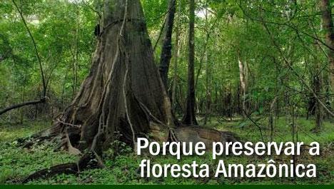 Porque preservar a floresta Amazônica