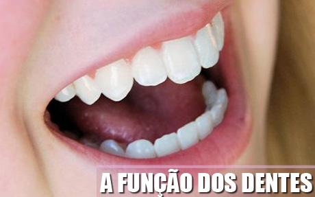 A função dos dentes