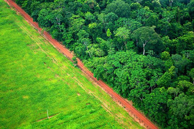 Campo para agricultura ou preservação da natureza? Tema ainda causa discussão (Foto: Reprodução)