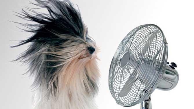 O calor excessivo pode causar hipertermia em cães e gatos