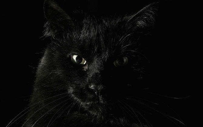 O gato preto é um dos símbolos da sexta-feira 13