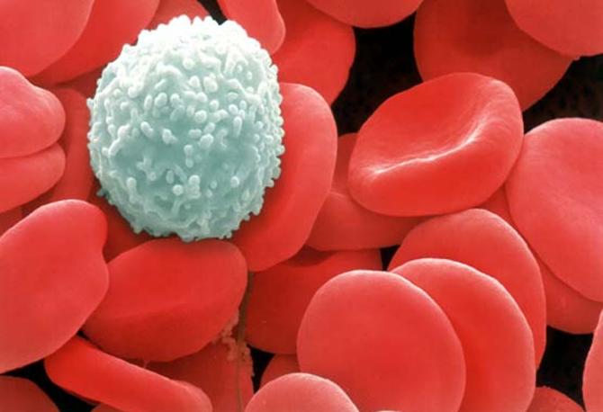 globulos-brancos-e-globulos-vermelhos
