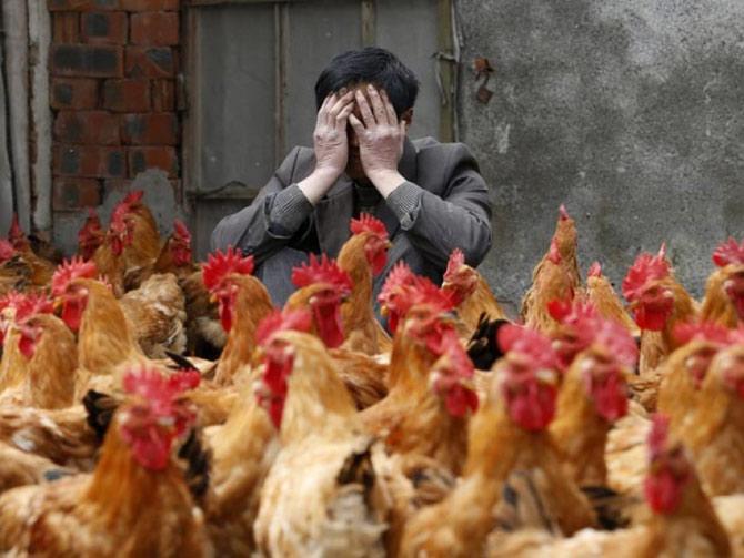 A gripe avirária H7N9 registra milhares de casos e algumas centenas de óbitos. (Foto: Lancenet)
