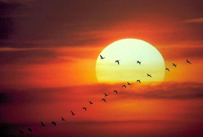 O Sol é importantíssimo para qualquer ser vivo da Terra.