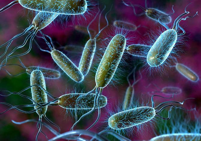 As bactérias tem a capacidade de se multiplicar rapidamente. (Foto: Ilustração)
