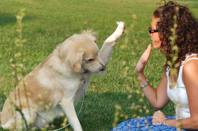 É necessário que você conheça e respeite seu cão para que ele te obedeça.