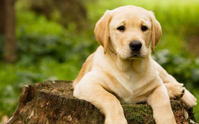 Nunca desista do seu cachorro, pois é necessário paciência para que você tenha um bom resultado.