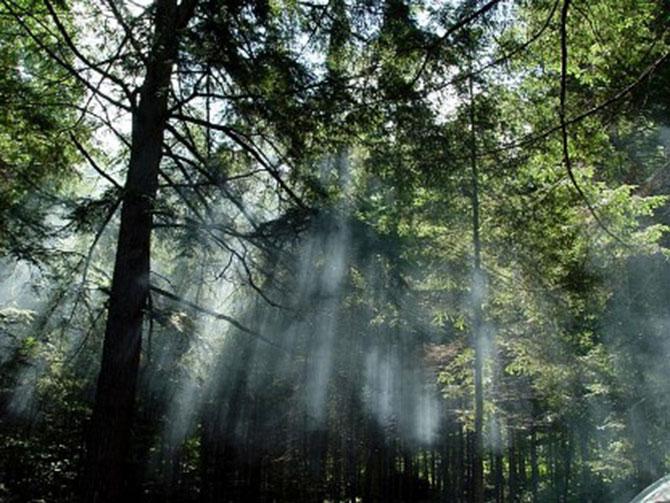 florestas-tropicais