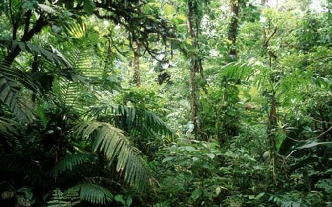 Florestas equatoriais sempre estão úmidas, devido as altas temperaturas e chuvas constantes