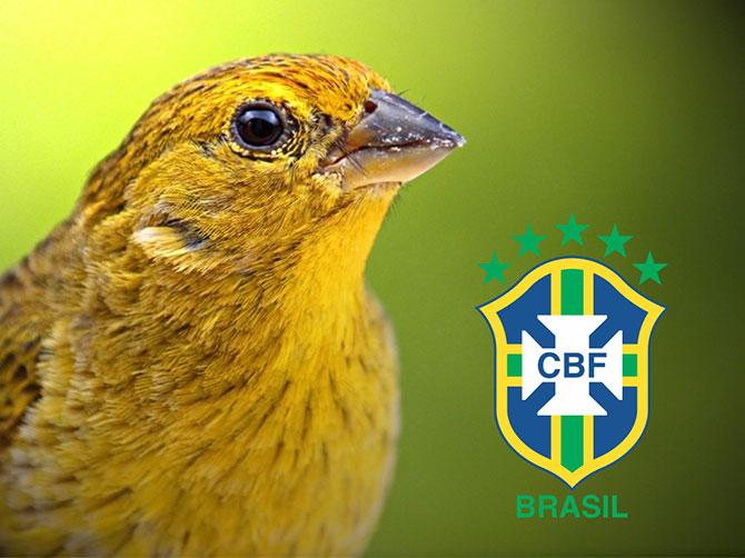 seleção-brasileira-canarinho