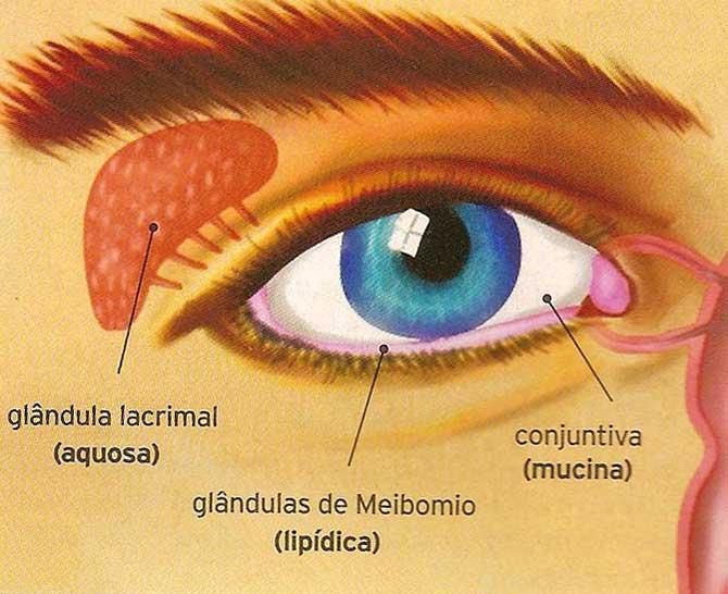 Glândulas lacrimais