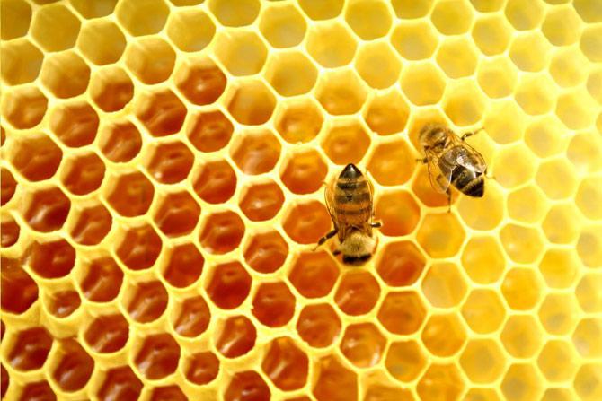 A formação do mel está intimamente relacionada ao processo de polinização das flores