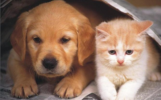 Cães e gatos também possuem preferência de um lado do corpo