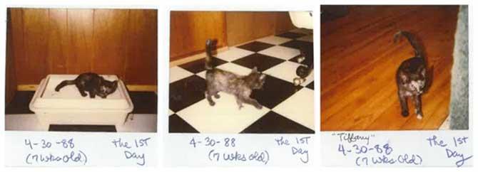 Primeiras fotos de Tiffany Two em 1988.