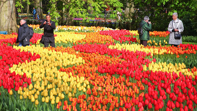 Mais de 7 milhões de flores são plantadas todos os anos