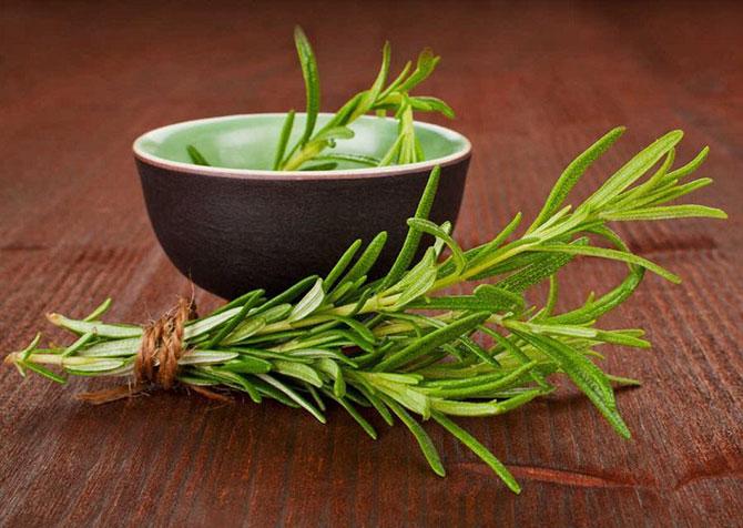 O alecrim pode ser usado para condimentar sopas, molhos e carnes e em chás
