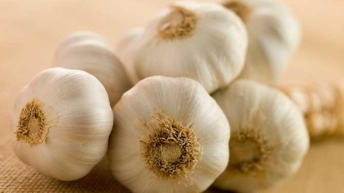 O alho é muito conhecido por ajudar no tratamento de gripes e resfriados