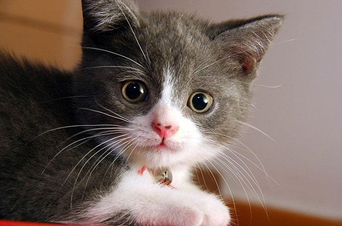 O bigode do gato serve como um guia no escuro