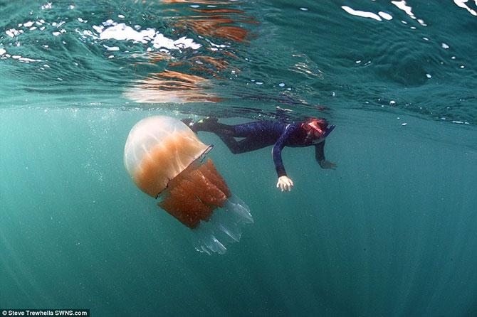 Costa britânica de Dorset, sofre com infestação de água-vivas gigantes (Imagem: Daily Mail/Reprodução)