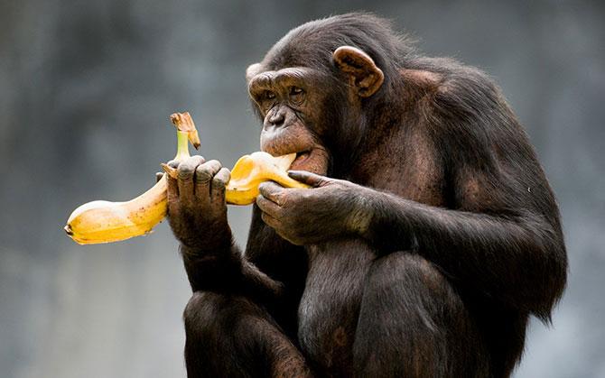 Será que eles são tão fãs assim de banana? (Imagem: Reprodução)