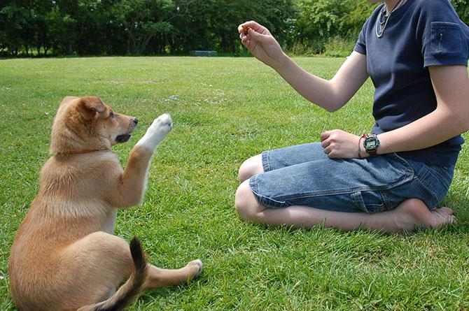 Assim como nós, alguns animais também são destros e canhotos (Imagem: Reprodução)