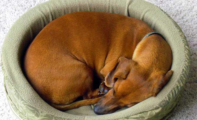 Acredita-se que esse costume surgiu antes mesmo dos cães serem domesticados (Imagem: Reprodução)