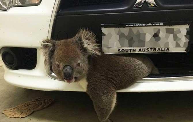 Mulher pensou que havia matado o animal (Imagem: Reprodução/Twitter/ABC News)